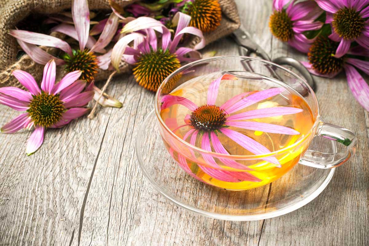 Echinacea e Prevenzione al Covid-19
